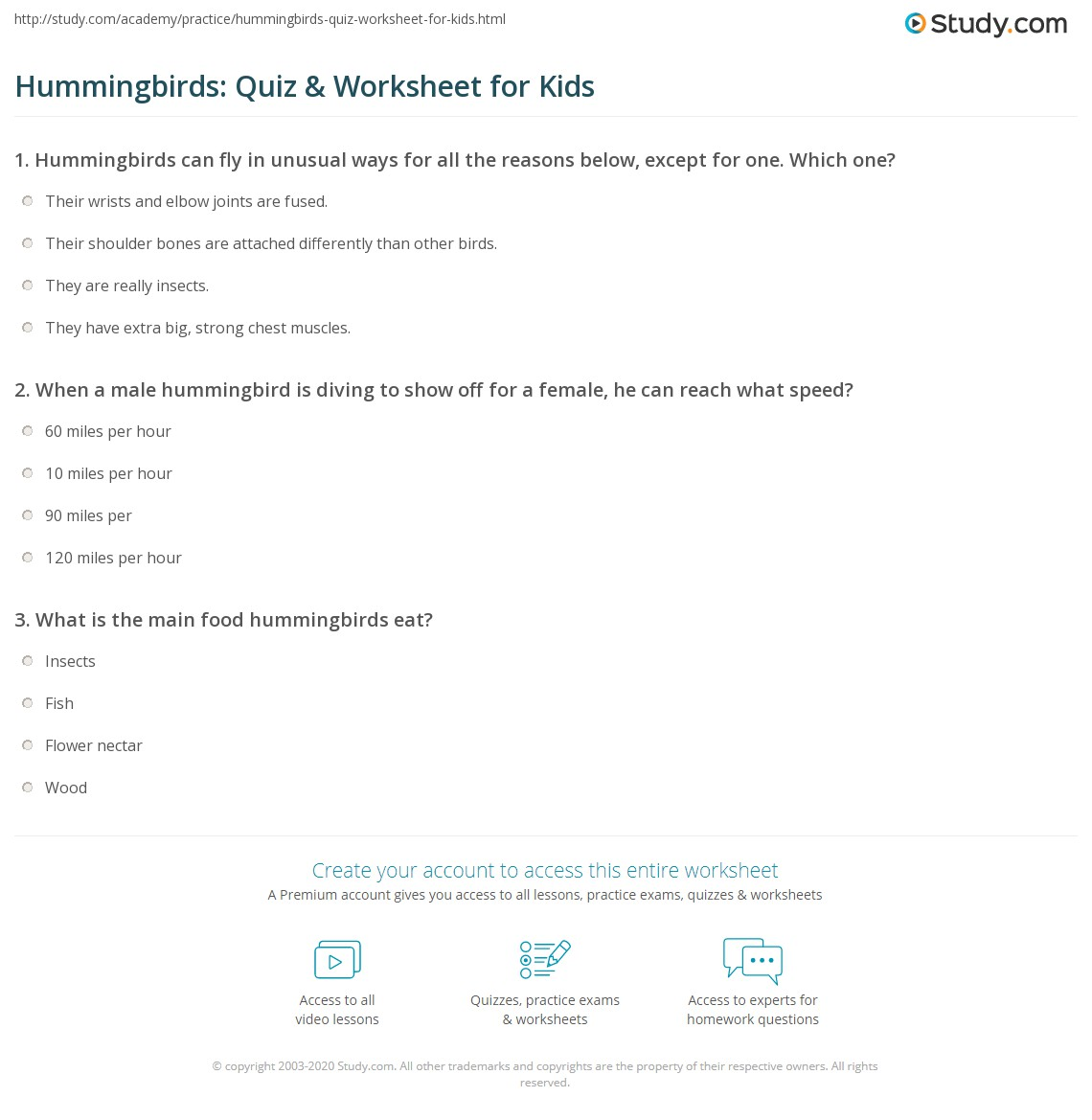 Hummingbirds Quiz Amp Worksheet For Kids