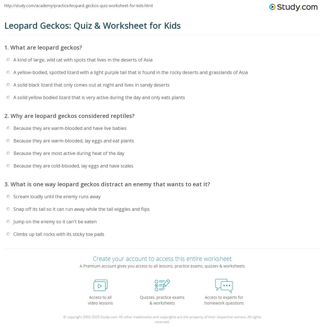 Leopard Geckos Quiz Amp Worksheet For Kids