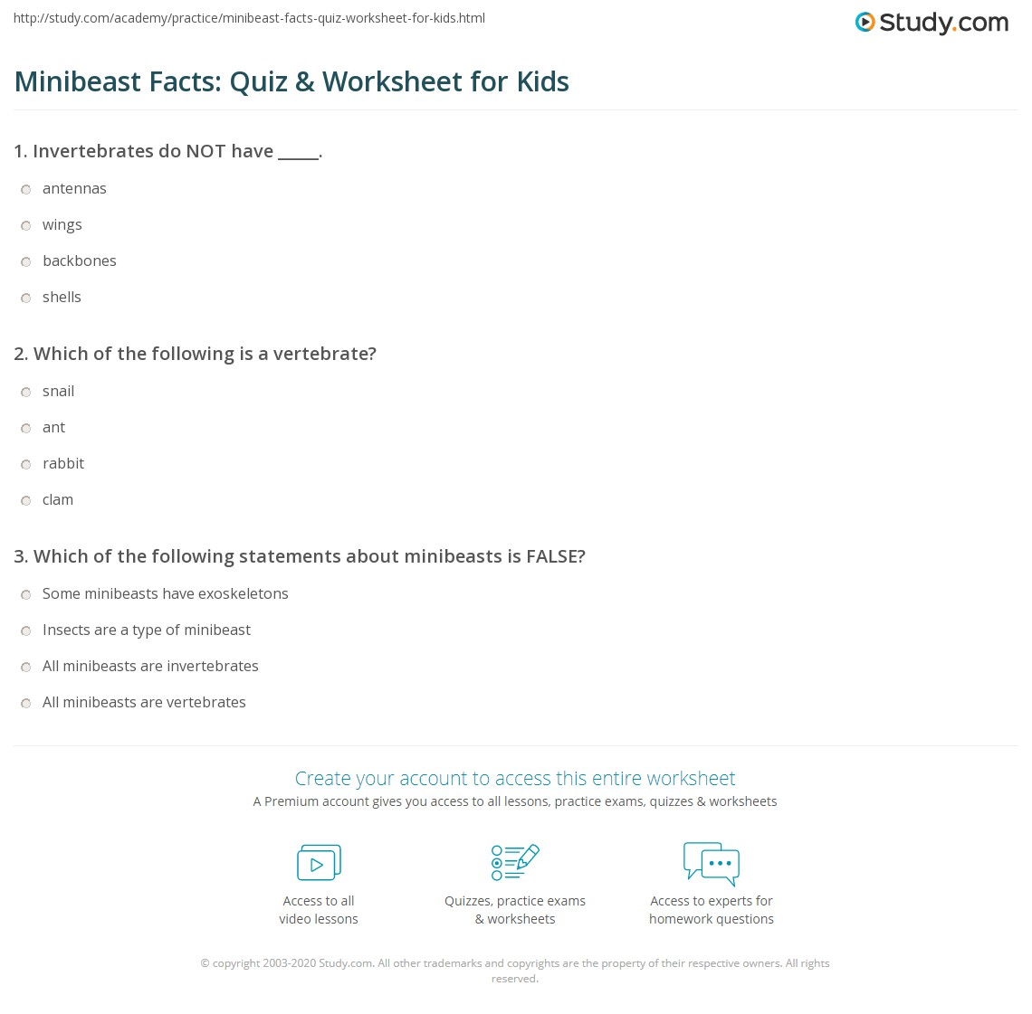 Minibeast Facts Quiz Amp Worksheet For Kids