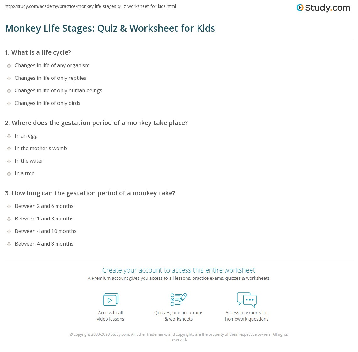 Monkey Life Stages Quiz Amp Worksheet For Kids
