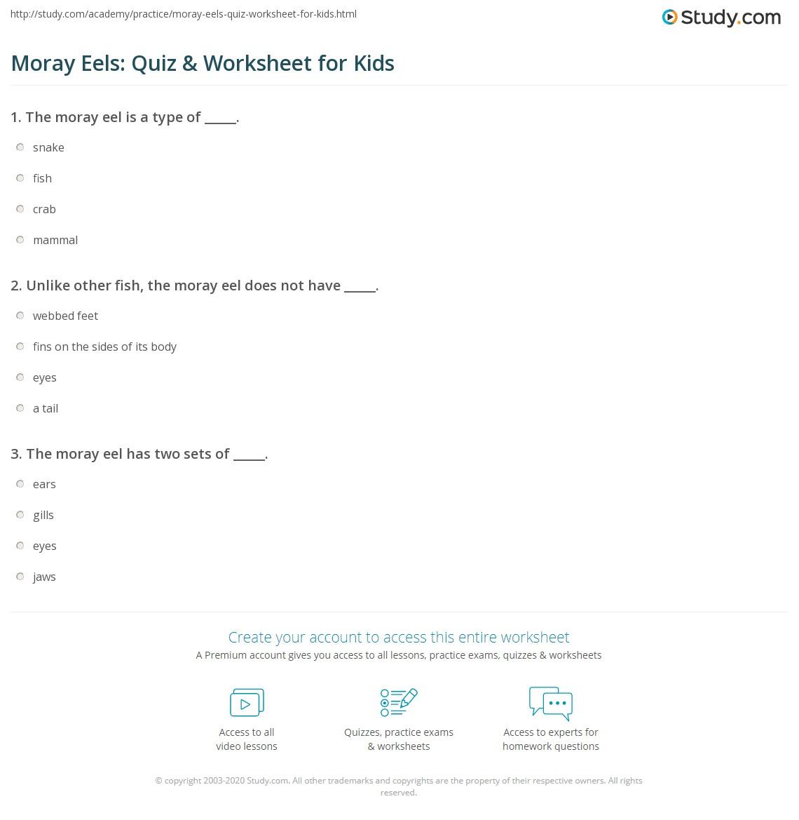 Moray Eels Quiz Amp Worksheet For Kids