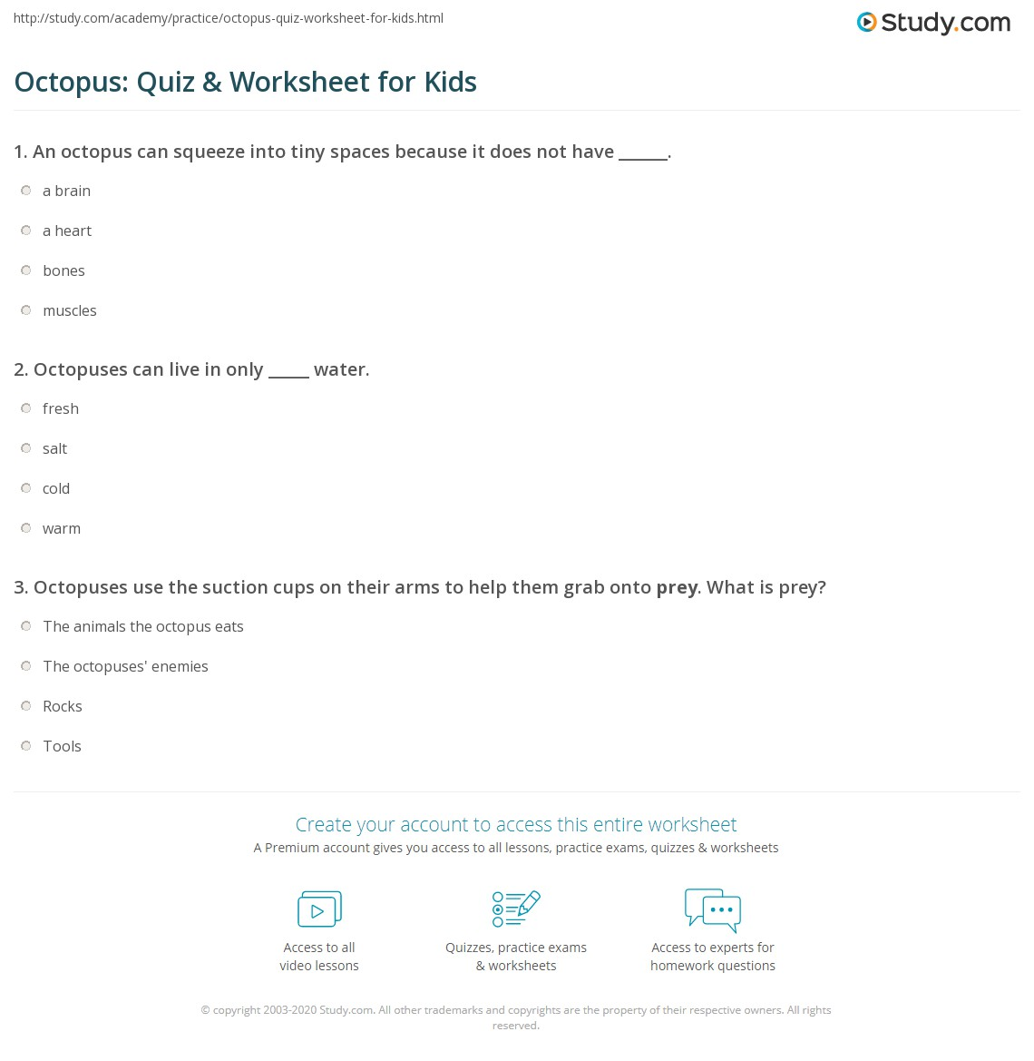 Octopus Quiz Amp Worksheet For Kids