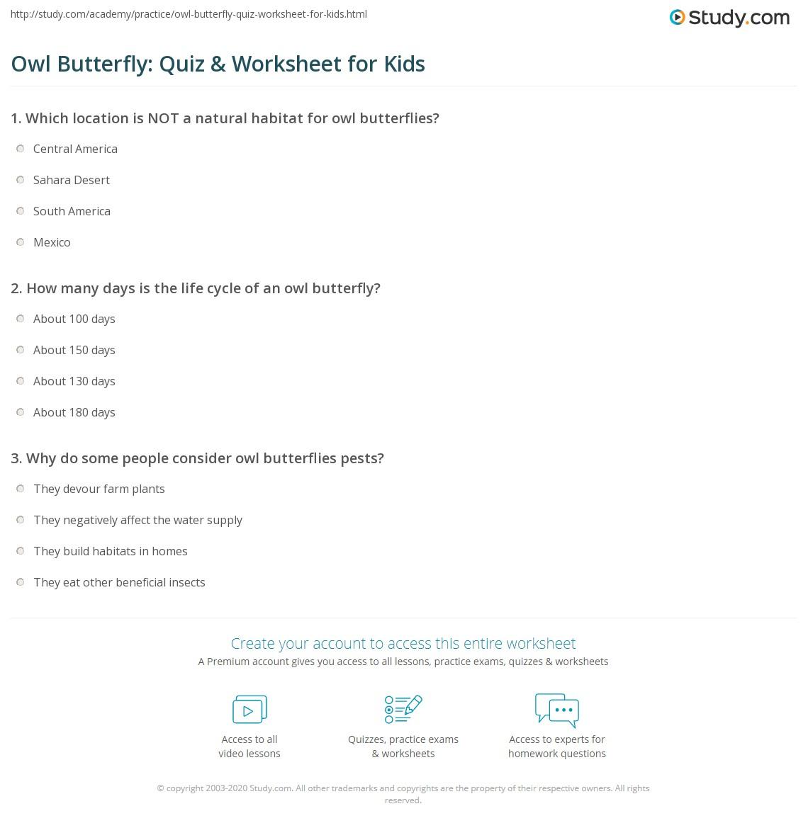 Owl Butterfly Quiz Amp Worksheet For Kids