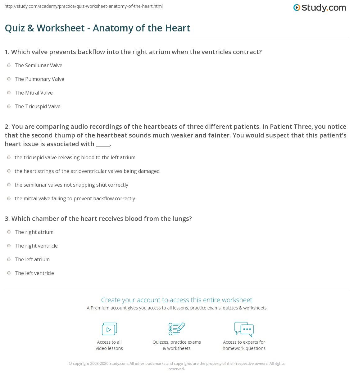 Anatomy Of The Heart Worksheet