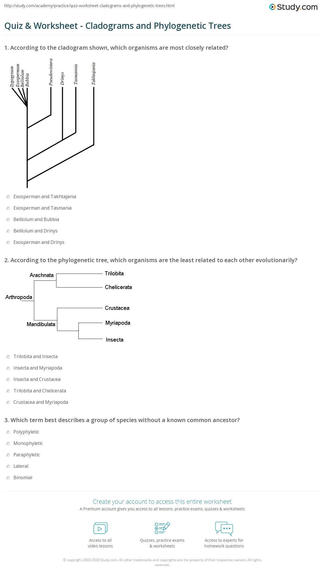Cladogram Worksheet Answer Key Livinghealthybulletin