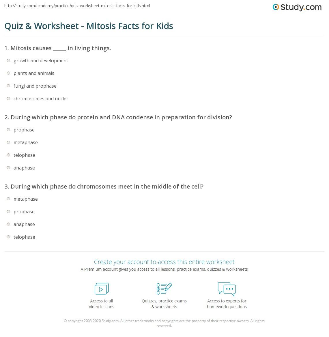 Metaphase Mitosis Worksheet