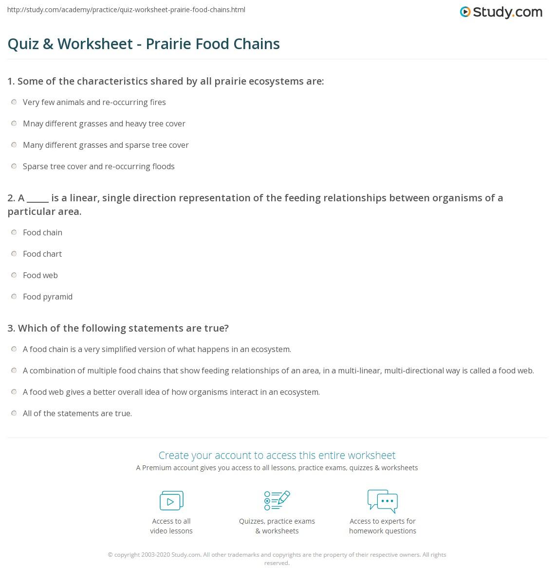 Polar Bear Food Chain Worksheet