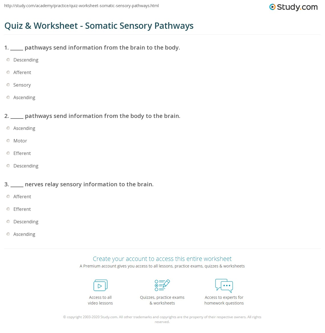 Somatic Sensory And Motor Pathways Worksheet Answers