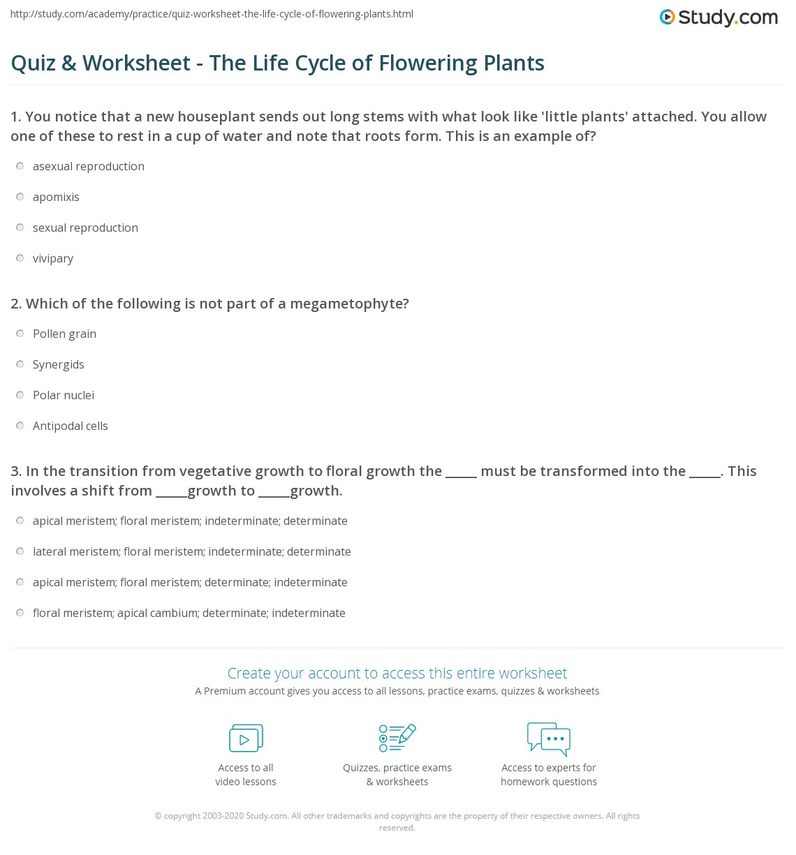 Flowering Plants Life Cycle Worksheet
