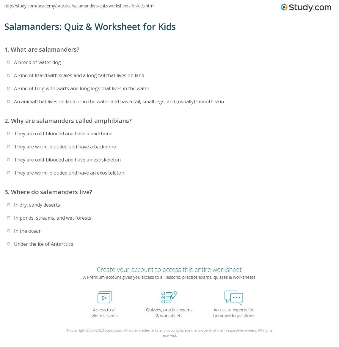Salamanders Quiz Amp Worksheet For Kids