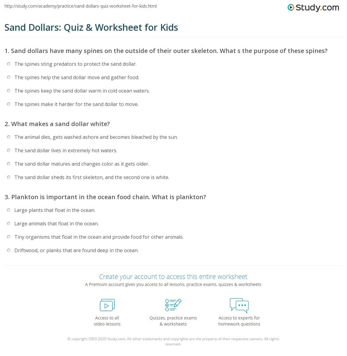 Sand Dollars Quiz Amp Worksheet For Kids