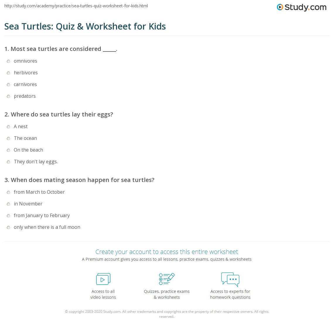 Sea Turtles Quiz Amp Worksheet For Kids