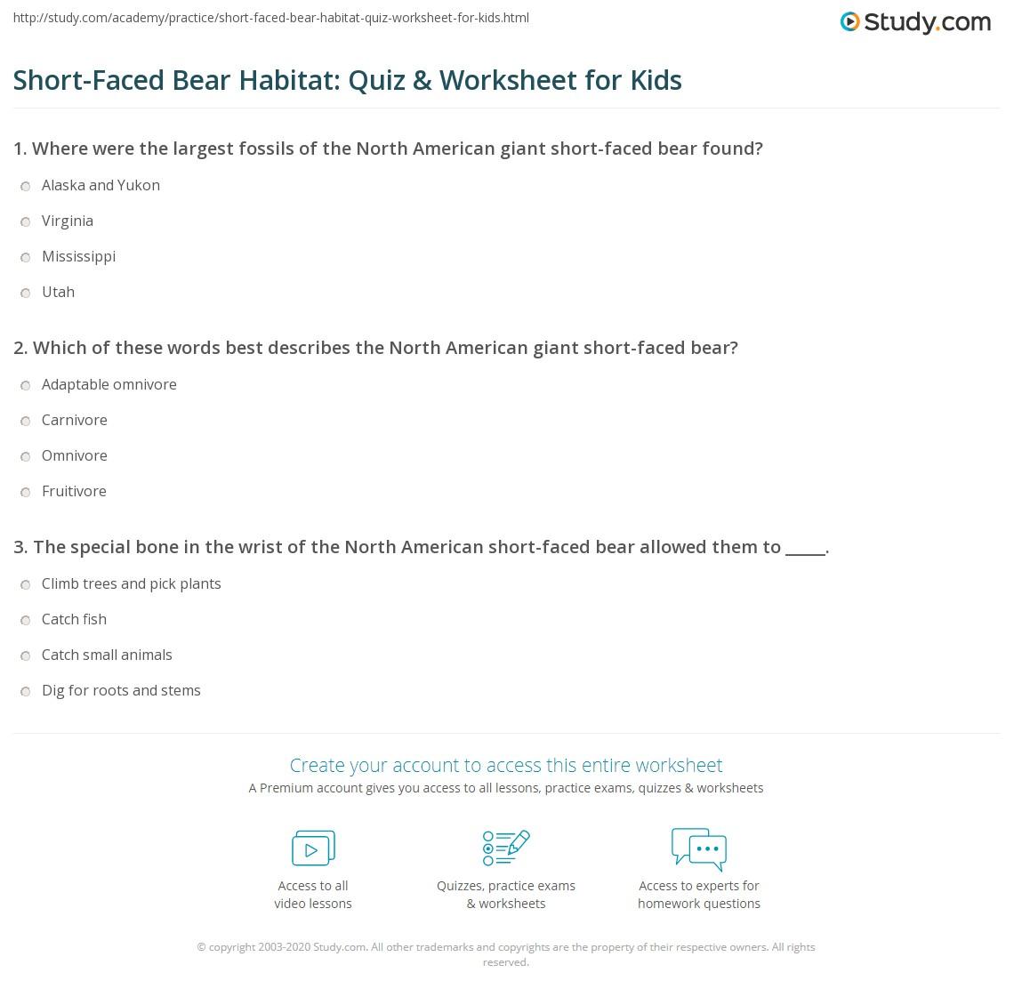 Short Faced Bear Habitat Quiz Amp Worksheet For Kids