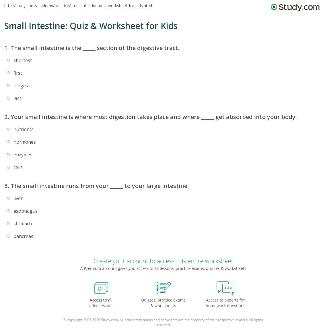 Small Intestine Quiz Amp Worksheet For Kids