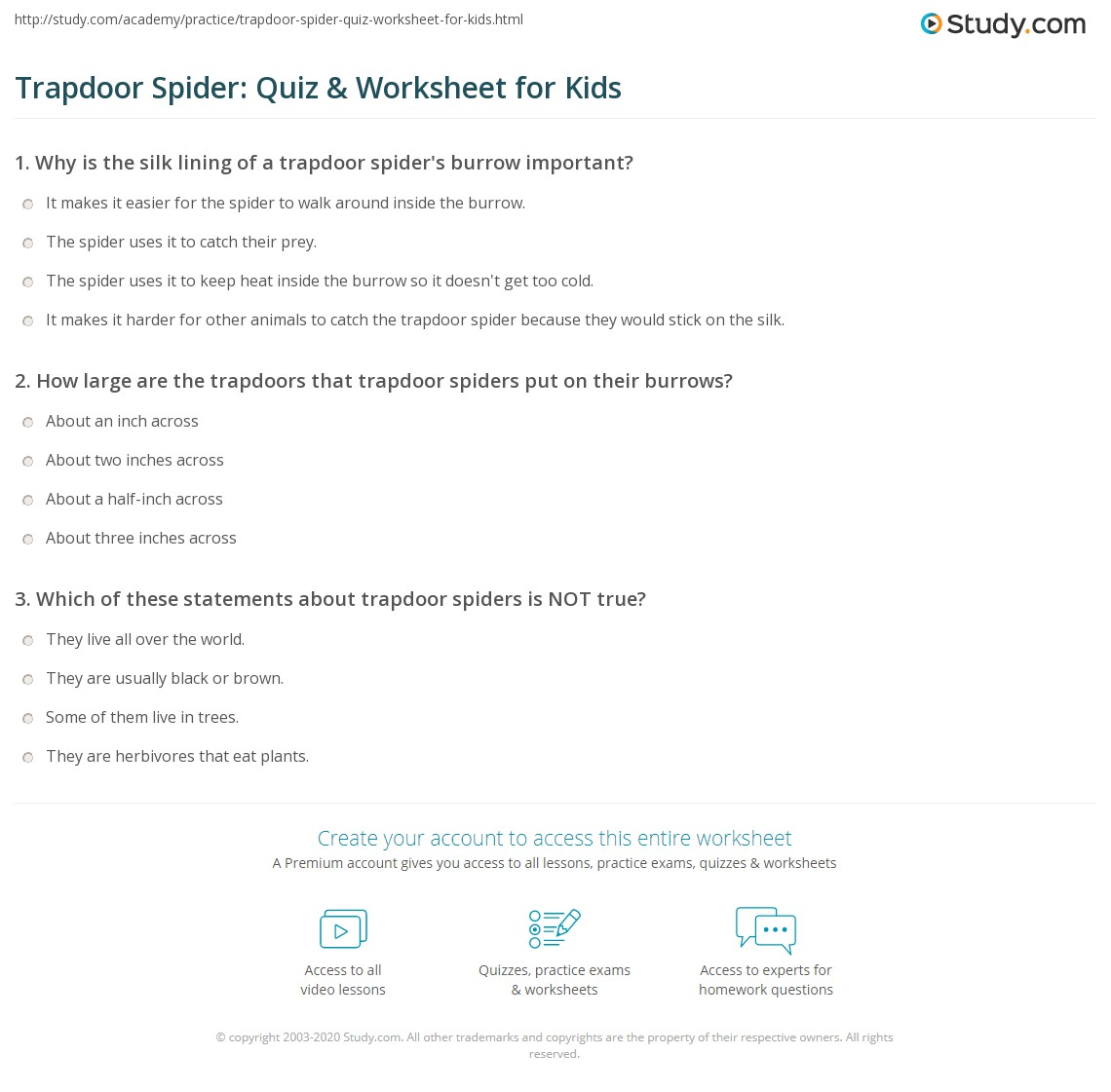 Trapdoor Spider Quiz Amp Worksheet For Kids