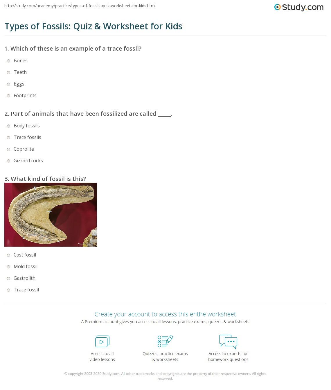 Types Of Fossils Quiz Amp Worksheet For Kids