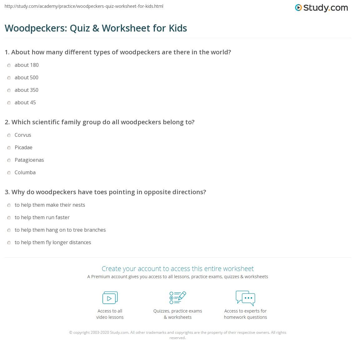 Woodpeckers Quiz Amp Worksheet For Kids