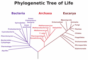 Archaea & Bacteria: Similarities & Differences  Video & Lesson Transcript | Study
