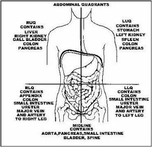 The 4 Abdominal Quadrants Regions Amp Organs