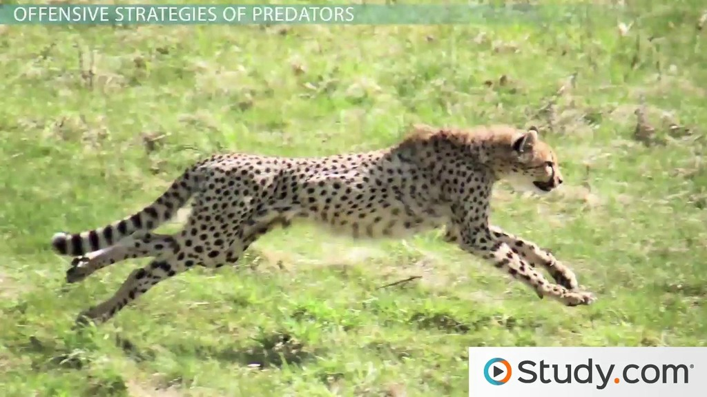 Predator Prey Interactions Camouflage Mimicry Amp Warning