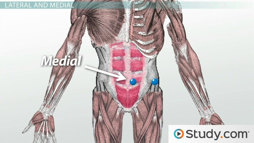Anatomical Directional Terminology: Lateral, Medial & More ...