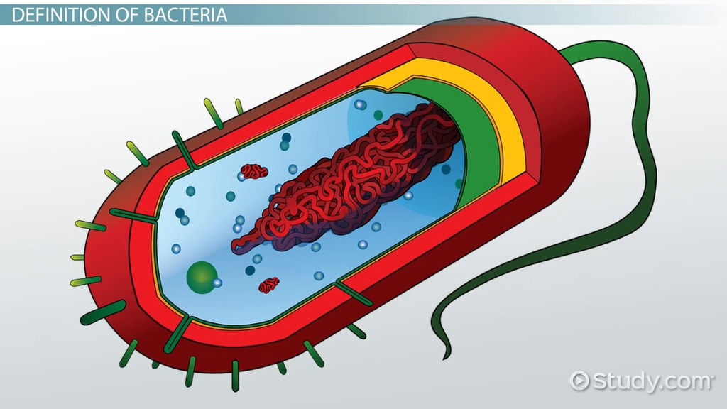 Components Animal Cell Cell
