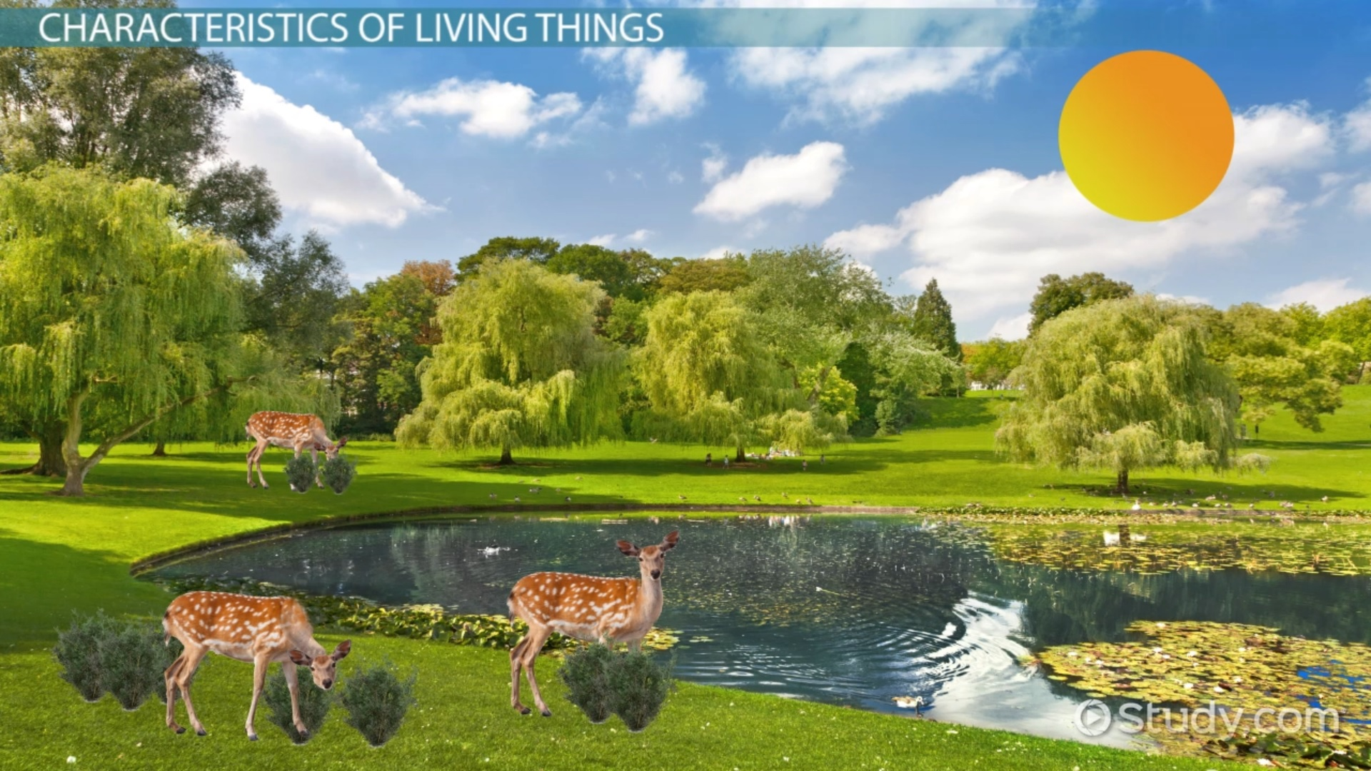 Characteristics Of Living Things Video With Lesson