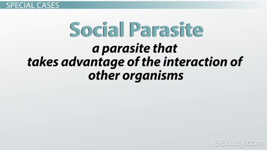 Parasitism Examples Amp Definition Video Amp Lesson