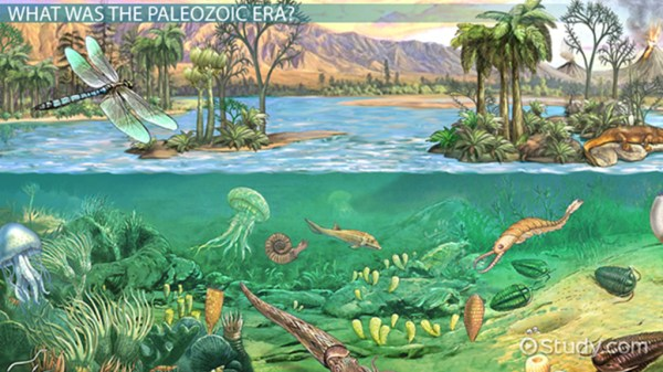The Paleozoic Era Definition Timeline amp Events Video