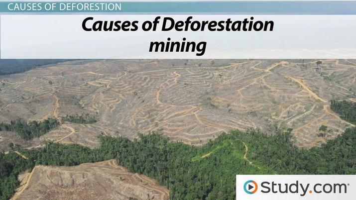 Deforestation has important global consequences. Deforestation Definition Causes Consequences Video Lesson Transcript Study Com