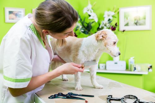 hundskötselskolor i Florida