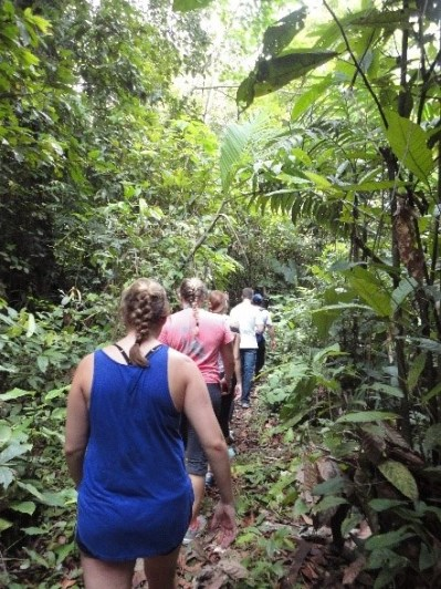 Hiking up the mountain through the jungle forage