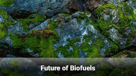 future of biofuels