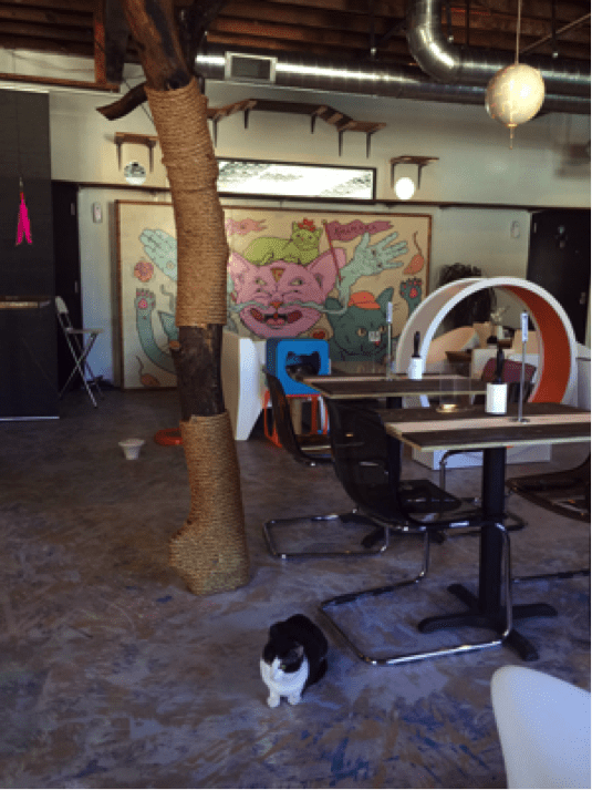 Getting the Scoop on Cat Cafés