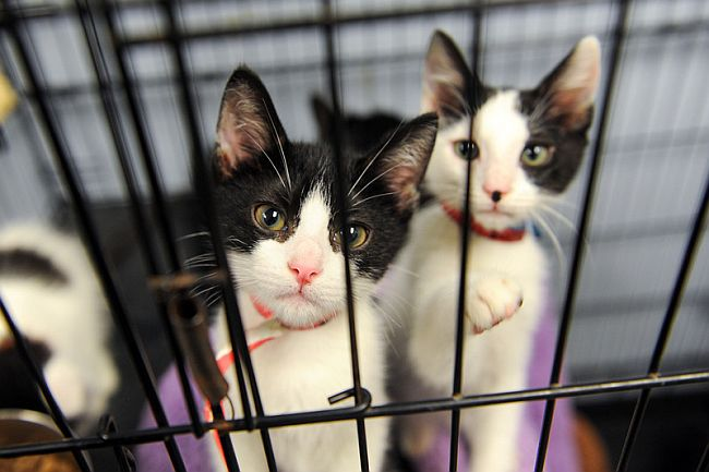 Temporary Home: The Pros and Cons of Fostering Pets in College