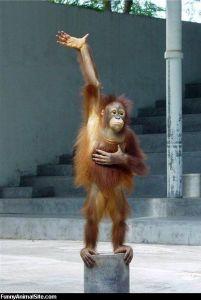 Monkey_Has_A_Question
