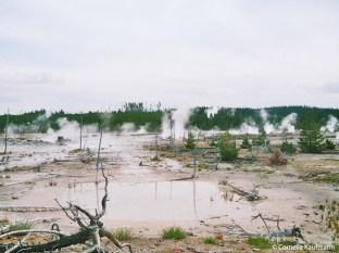 Yellowstone's Norris Geyser Basin. Copyright Cornelia Kaufmann