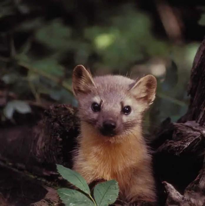 مسابقة تصوير الحيوانات البرية من Photocrowd