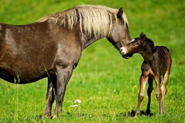 Foaling preparations will ensure a healthy foal