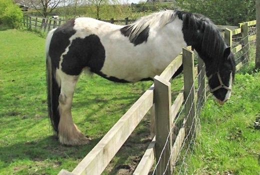 A simple wooden horse fence