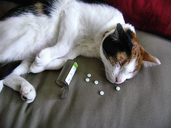 How to give a cat a pill