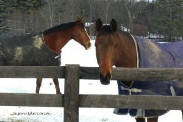 Extreme cold and horses