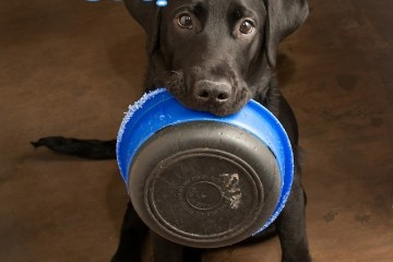 Dog food: How to Choose the best food for your dog
