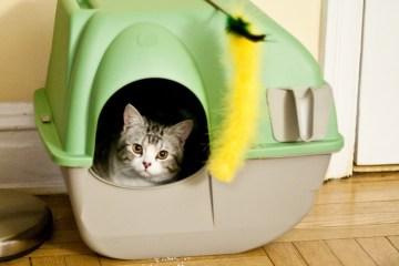 Litter box filled with organic kitty litter