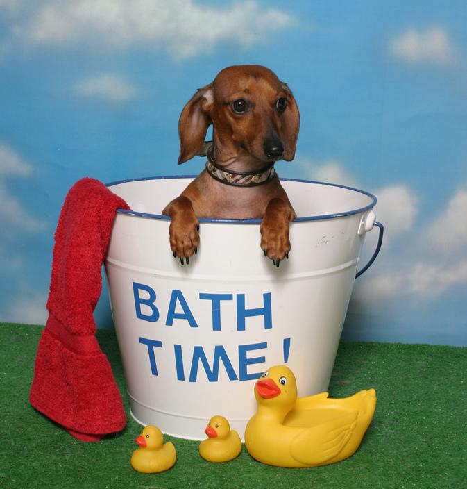 Dog Washing How To Bathe Your Dog Stuff4petz