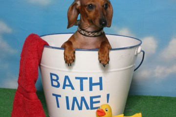 Bathing your dog