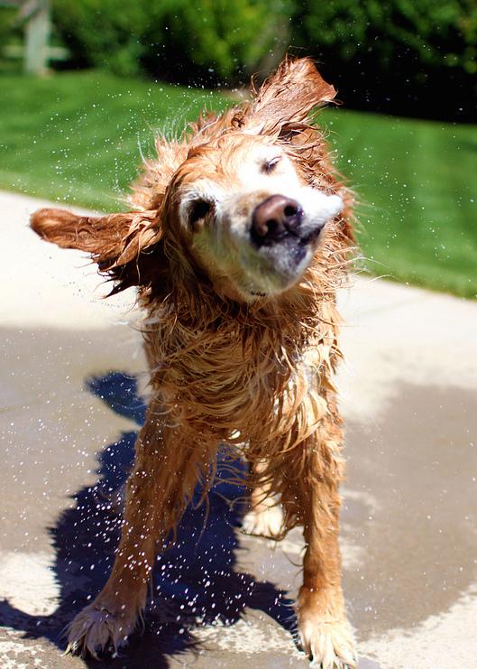 Dog Bath Time - Just Shake it!