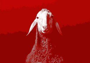 spring-offensive-sheep_v2-high-res-copy