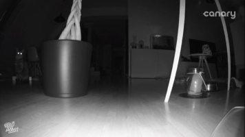 Nachtsichtmodus der Canary