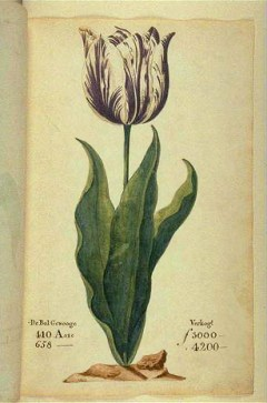 """The Viceroy"", displayed in a 1637 Dutch catalog. Its bulb cost between 3,000 and 4,150 guilders (florins) depending on size, or 10x the annual wage of a skilled craftsman."